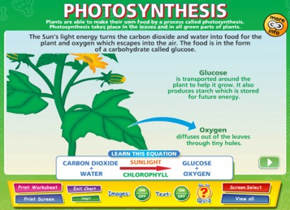 Photosynthesis Interactive Software